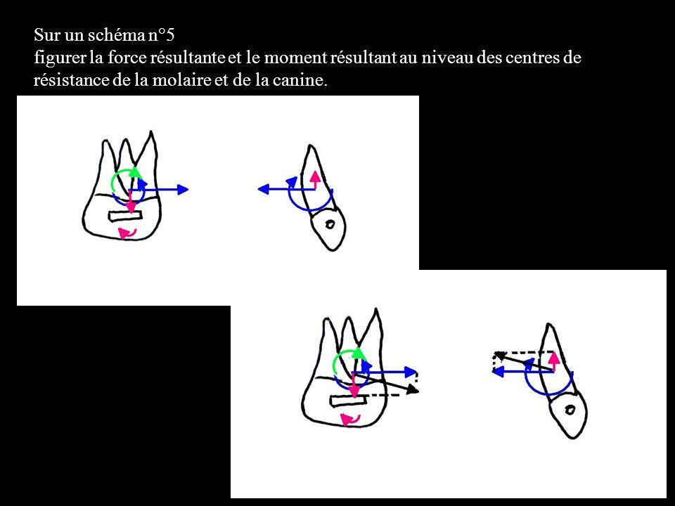 Schéma n°5 force résultante et moment résultant au niveau des centres de résistance de la molaire et de la canine.