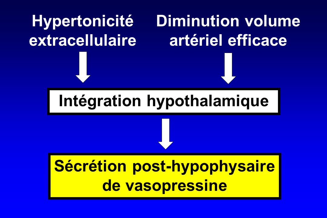 Intégration hypothalamique Hypertonicité extracellulaire Diminution volume artériel efficace Sécrétion post-hypophysaire de vasopressine