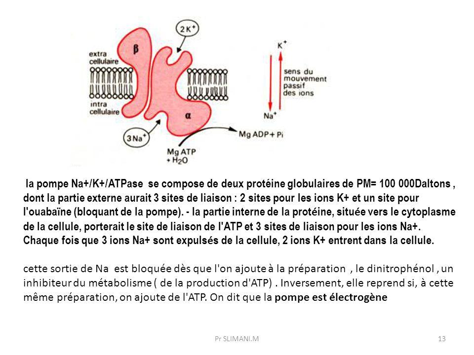 la pompe Na+/K+/ATPase se compose de deux protéine globulaires de PM= 100 000Daltons, dont la partie externe aurait 3 sites de liaison : 2 sites pour