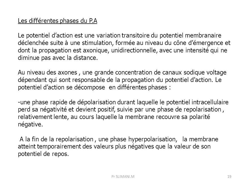 19 Les différentes phases du P.A Le potentiel d'action est une variation transitoire du potentiel membranaire déclenchée suite à une stimulation, form