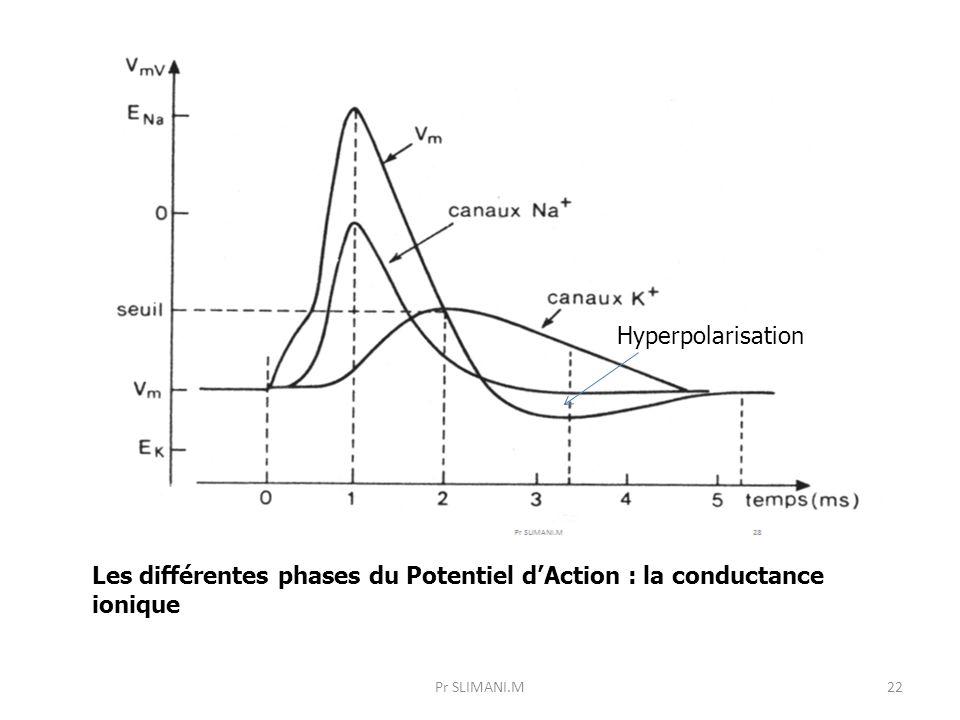 Pr SLIMANI.M22 Les différentes phases du Potentiel d'Action : la conductance ionique Hyperpolarisation