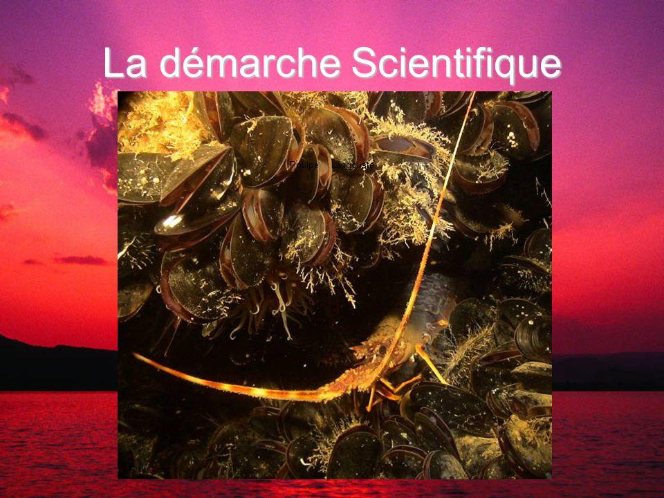 La démarche Scientifique MostelleTacaud CongreBlennie pilicorne PoulpeLangouste