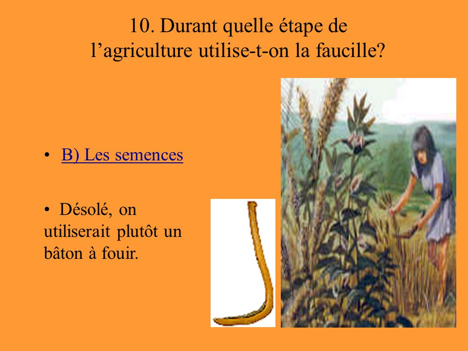 10. Durant quelle étape de l'agriculture utilise-t-on la faucille? B) Les semences Désolé, on utiliserait plutôt un bâton à fouir.