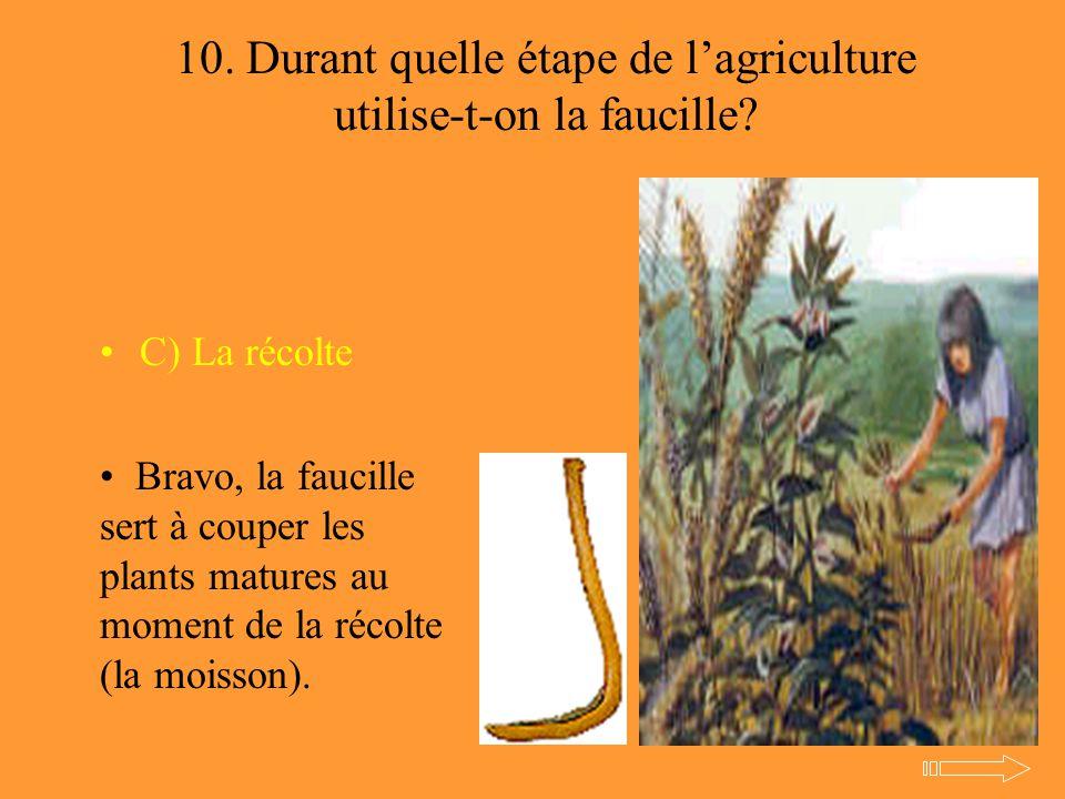 10. Durant quelle étape de l'agriculture utilise-t-on la faucille? C) La récolte Bravo, la faucille sert à couper les plants matures au moment de la r