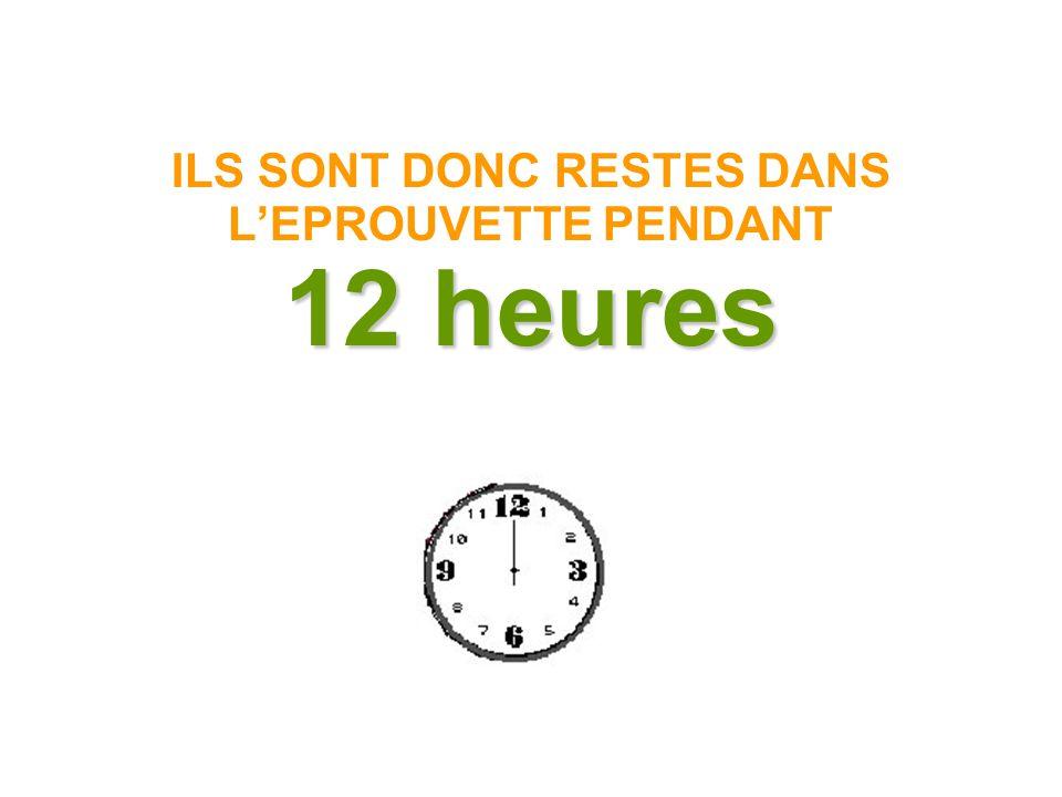 12 heures ILS SONT DONC RESTES DANS L'EPROUVETTE PENDANT 12 heures