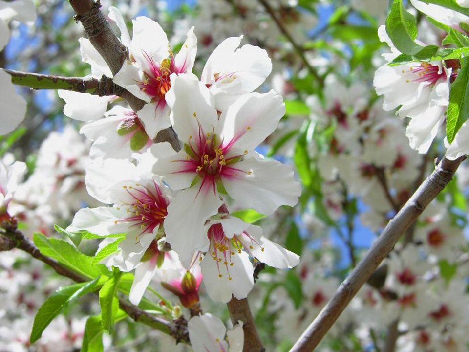 Chant du printemps