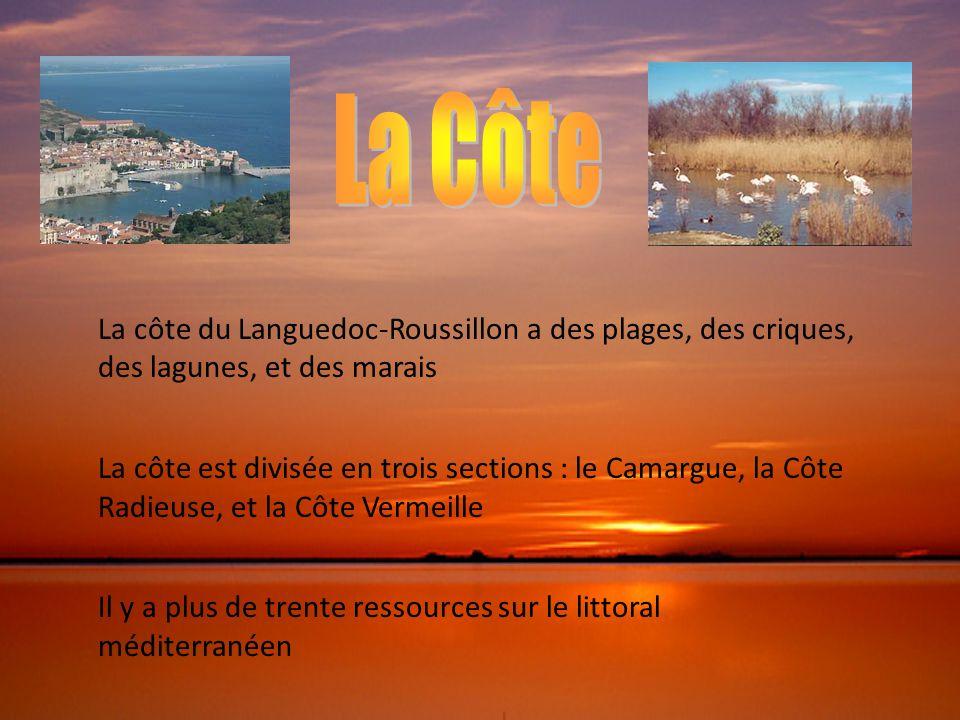 La côte du Languedoc-Roussillon a des plages, des criques, des lagunes, et des marais La côte est divisée en trois sections : le Camargue, la Côte Rad