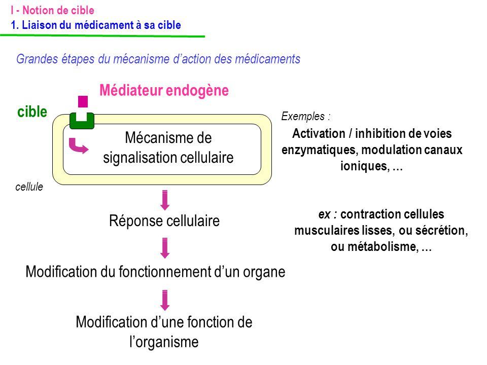 Médiateur endogène cible cellule Mécanisme de signalisation cellulaire Activation / inhibition de voies enzymatiques, modulation canaux ioniques, … Ré