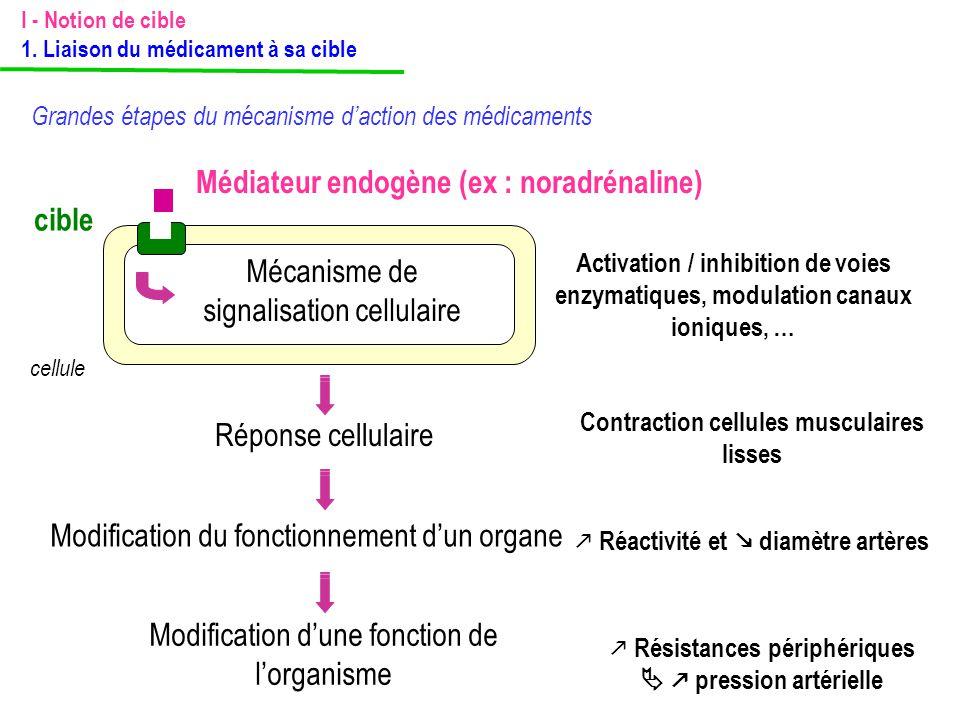 Médiateur endogène (ex : noradrénaline) cible cellule Mécanisme de signalisation cellulaire Activation / inhibition de voies enzymatiques, modulation