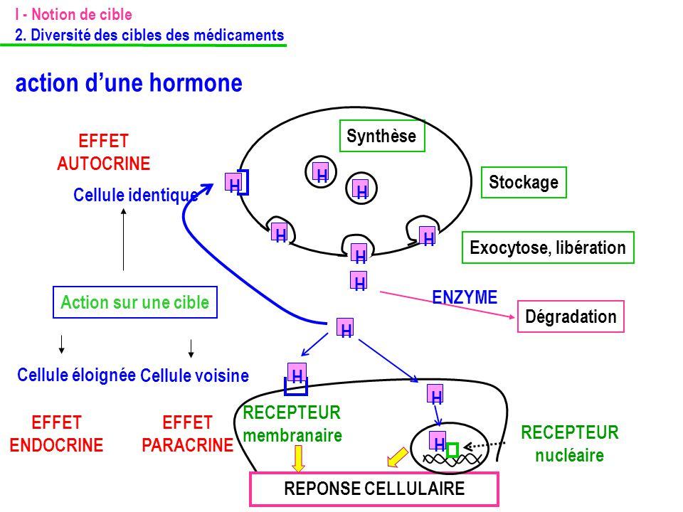 Synthèse Stockage Exocytose, libération Action sur une cible RECEPTEUR membranaire REPONSE CELLULAIRE H H H H H H RECEPTEUR nucléaire H H EFFET PARACR