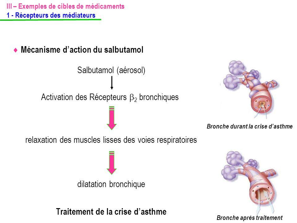relaxation des muscles lisses des voies respiratoires  Mécanisme d'action du salbutamol Salbutamol (aérosol) Activation des Récepteurs  2 bronchique