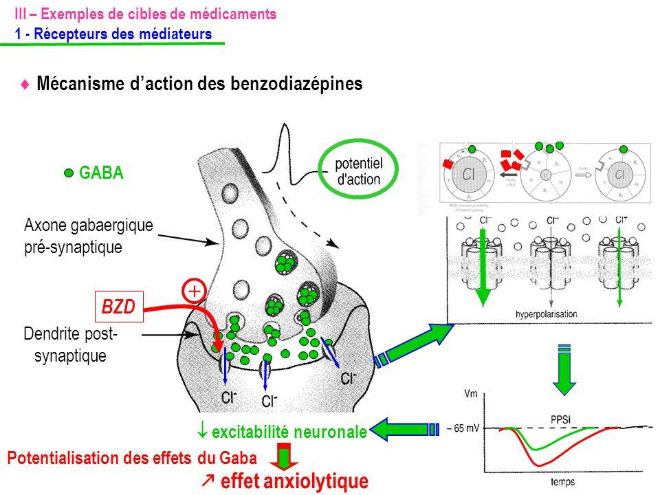 III – Exemples de cibles de médicaments 1 - Récepteurs des médiateurs  Mécanisme d'action des benzodiazépines  excitabilité neuronale  effet anxiol