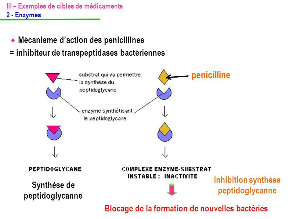  Mécanisme d'action des penicillines = inhibiteur de transpeptidases bactériennes Synthèse de peptidoglycanne Blocage de la formation de nouvelles ba