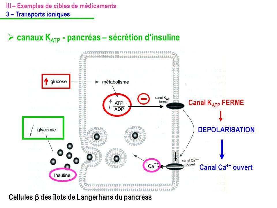 Canal Ca ++ ouvert Canal K ATP FERME - DEPOLARISATION III – Exemples de cibles de médicaments 3 – Transports ioniques  canaux K ATP - pancréas – sécr