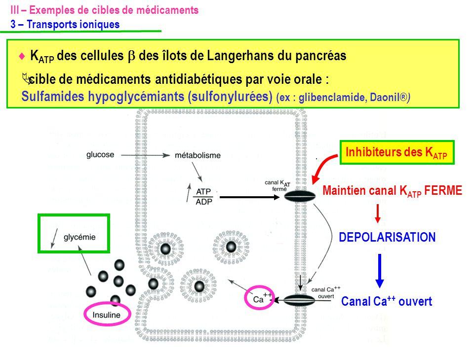 Canal Ca ++ ouvert Maintien canal K ATP FERME DEPOLARISATION Inhibiteurs des K ATP III – Exemples de cibles de médicaments 3 – Transports ioniques  K