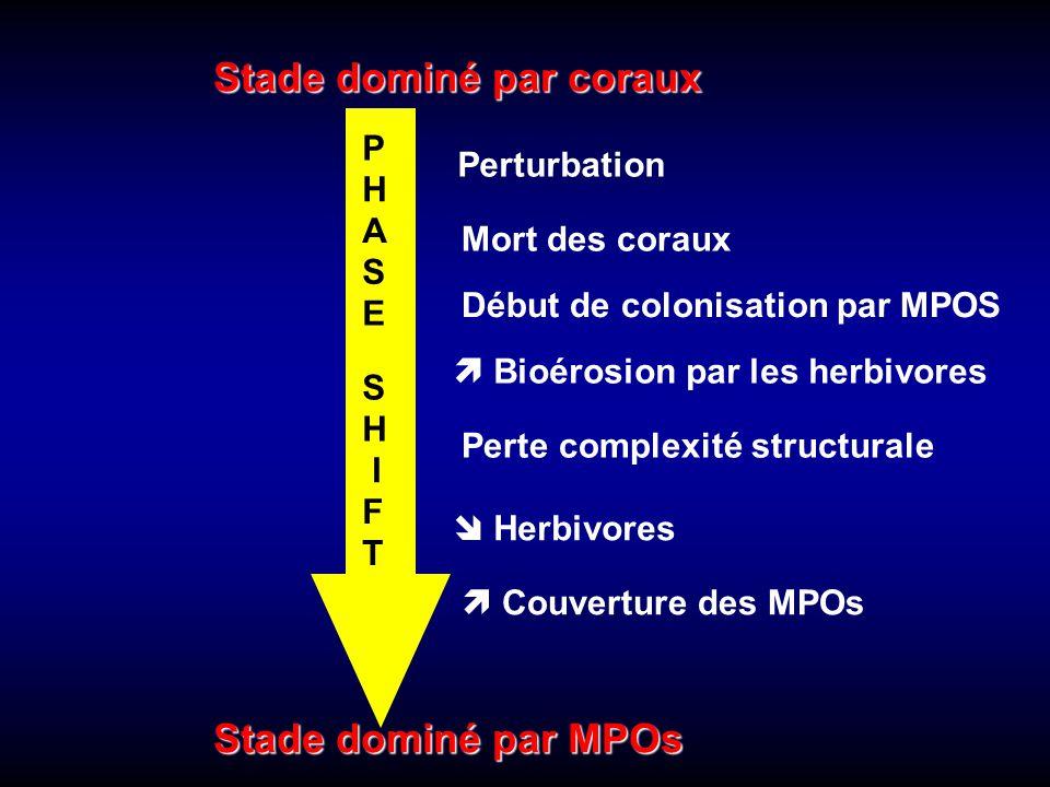Stade dominé par coraux Stade dominé par MPOs Perturbation Mort des coraux Début de colonisation par MPOS Perte complexité structurale  Herbivores 