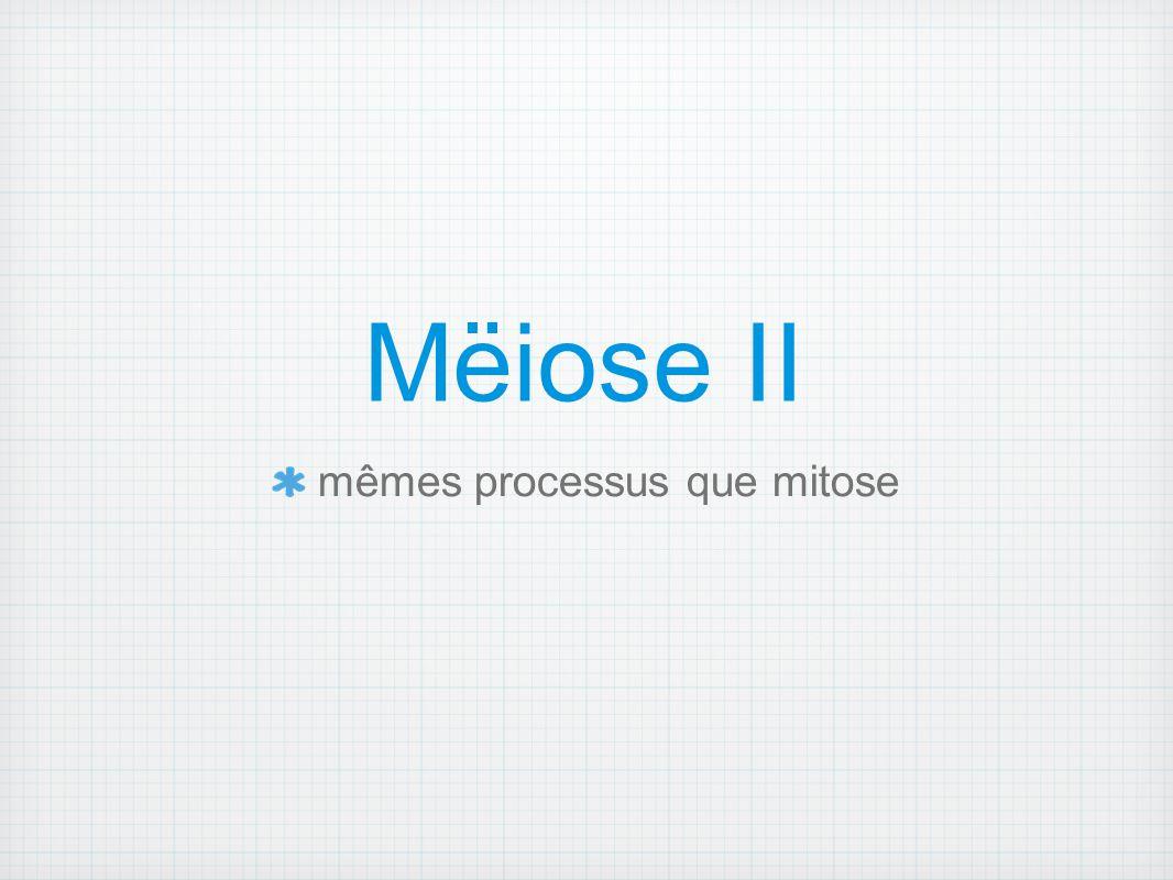 Mëiose II mêmes processus que mitose