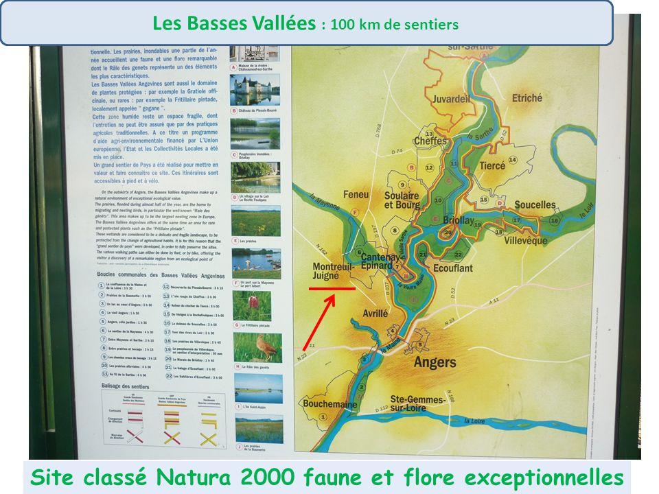 La Loire à Vélo. Elle rejoint les boucles de Touraine-Anjou, du Layon-Aubance, et les berges de la Mayenne, etc…