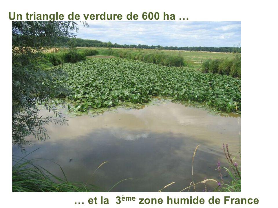 L'Ile Saint Aubin, à 8 mn de Montreuil La promenade préférée des angevins