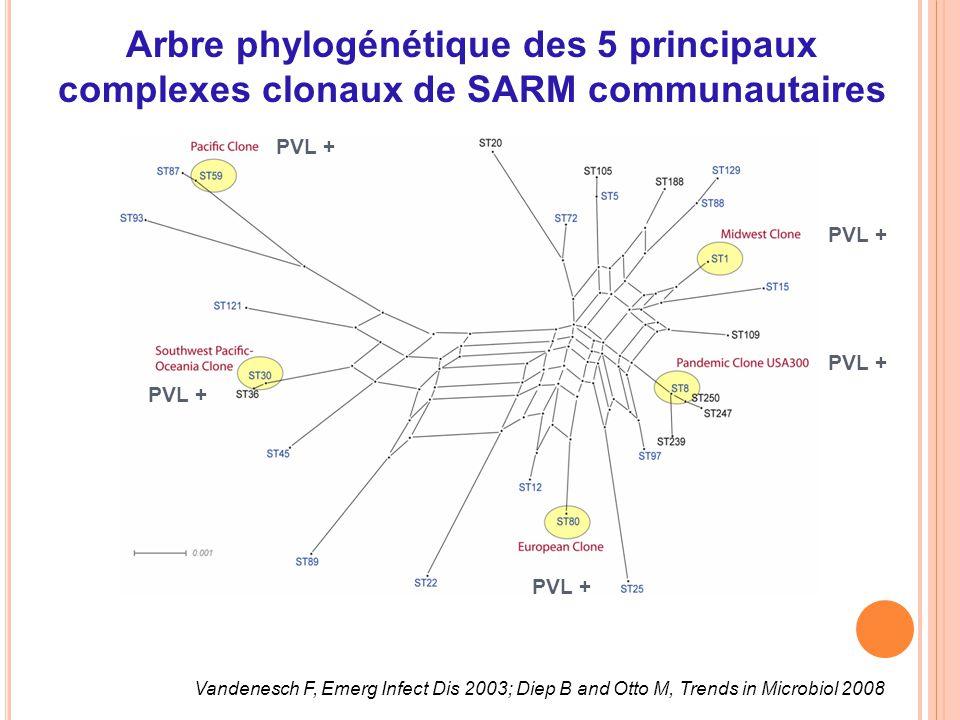 Arbre phylogénétique des 5 principaux complexes clonaux de SARM communautaires Vandenesch F, Emerg Infect Dis 2003; Diep B and Otto M, Trends in Micro
