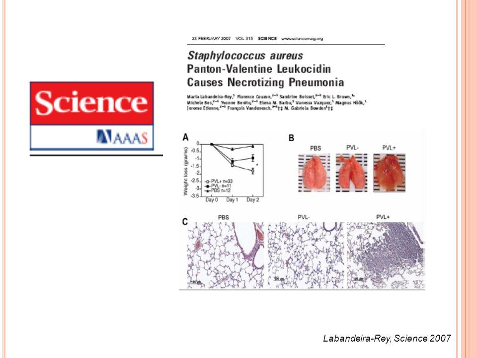 Labandeira-Rey, Science 2007