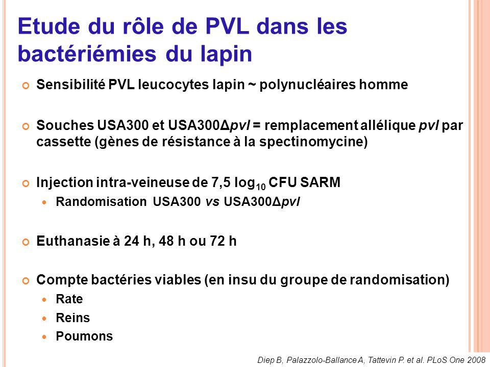 Etude du rôle de PVL dans les bactériémies du lapin Sensibilité PVL leucocytes lapin ~ polynucléaires homme Souches USA300 et USA300Δpvl = remplacemen