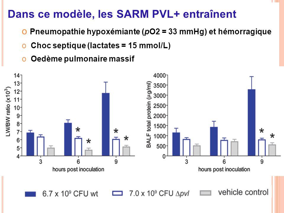 Dans ce modèle, les SARM PVL+ entraînent o Pneumopathie hypoxémiante (pO2 = 33 mmHg) et hémorragique o Choc septique (lactates = 15 mmol/L) o Oedème p