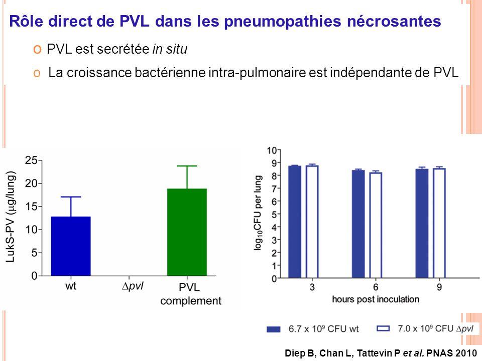 Rôle direct de PVL dans les pneumopathies nécrosantes o PVL est secrétée in situ o La croissance bactérienne intra-pulmonaire est indépendante de PVL