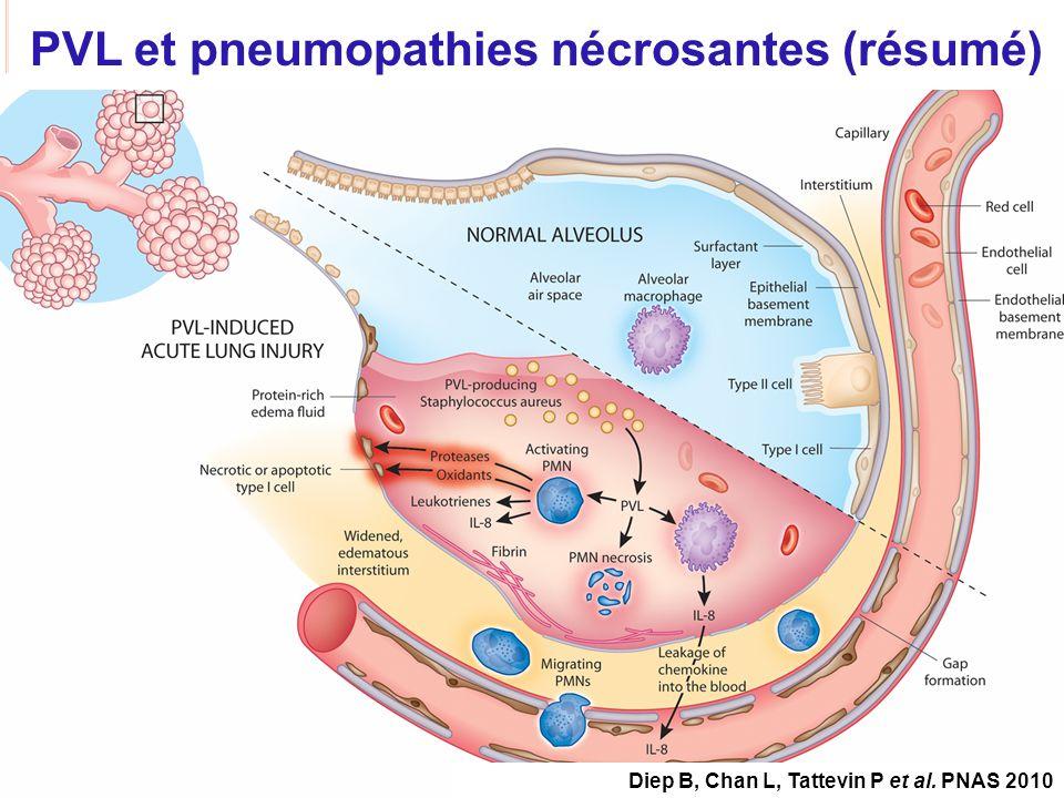 CNU 45-03, 15/04/2010 PVL et pneumopathies nécrosantes (résumé) Diep B, Chan L, Tattevin P et al. PNAS 2010
