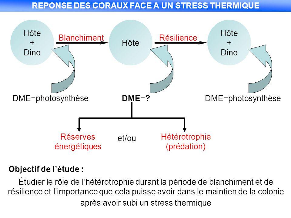 REPONSE DES CORAUX FACE A UN STRESS THERMIQUE Hôte + Dino Blanchiment Hôte Résilience Hôte + Dino DME=photosynthèseDME=?DME=photosynthèse Réserves éne