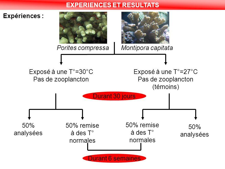 EXPERIENCES ET RESULTATS Expériences : Exposé à une T°=30°C Pas de zooplancton Exposé à une T°=27°C Pas de zooplancton (témoins) Durant 30 jours 50% a