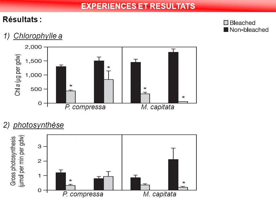 EXPERIENCES ET RESULTATS Résultats : 1)Chlorophylle a 2)photosynthèse P. compressaM. capitata P. compressaM. capitata