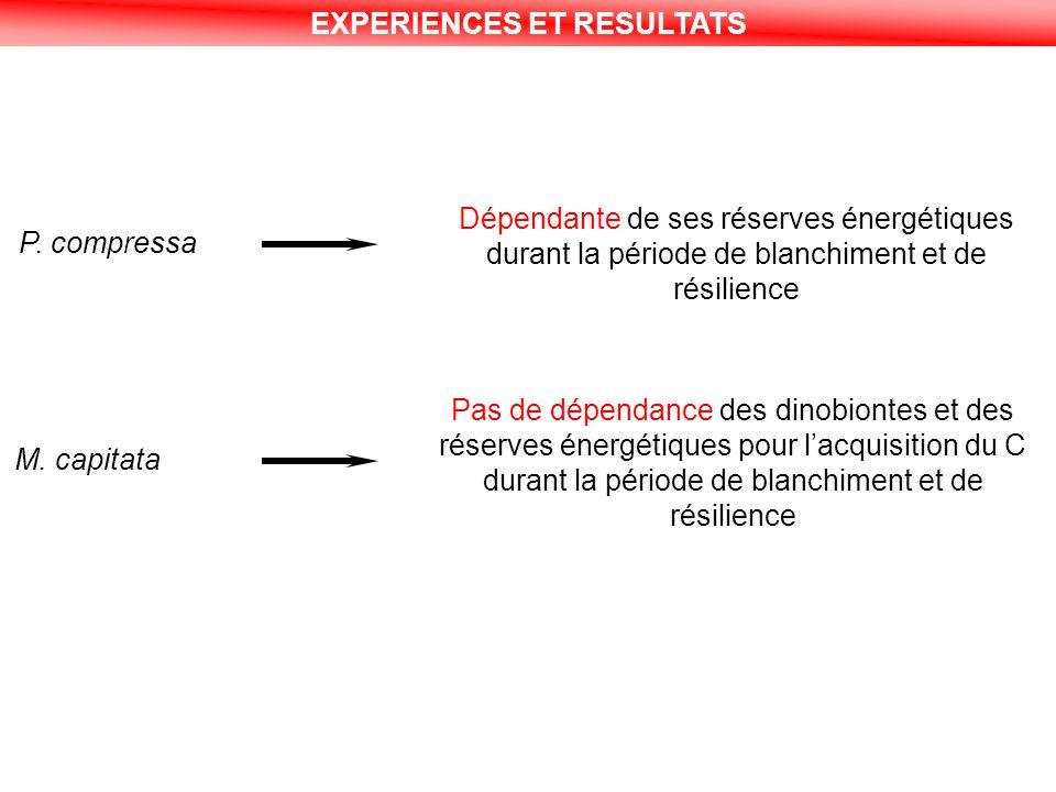 EXPERIENCES ET RESULTATS P. compressa Dépendante de ses réserves énergétiques durant la période de blanchiment et de résilience M. capitata Pas de dép