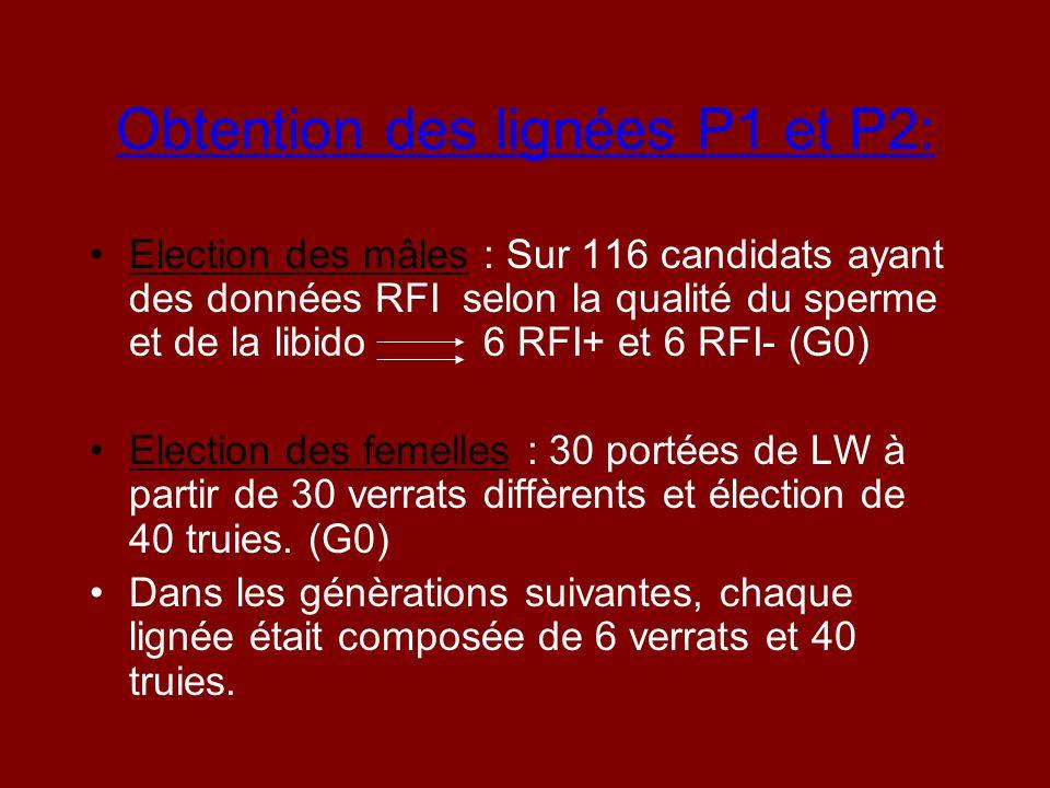 Obtention des lignées P1 et P2: Election des mâles : Sur 116 candidats ayant des données RFI selon la qualité du sperme et de la libido 6 RFI+ et 6 RF