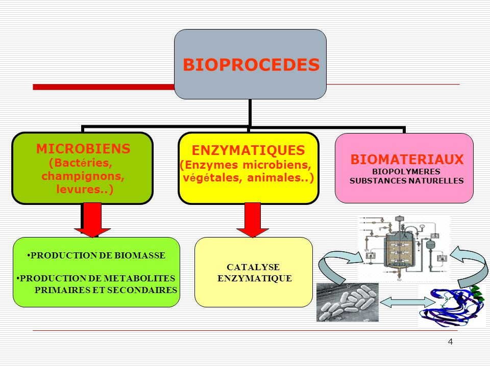 5 CHIMIE SYNTHESE ENZYMATIQUE PRODUITS ORGANIQUES BIOPOLYMERES APPLICATIONS DES BIOPROCEDES EN INDUSTRIE PHARMACEUTIQUE ANTIBIOTIQUES ENZYMES VITAMINES