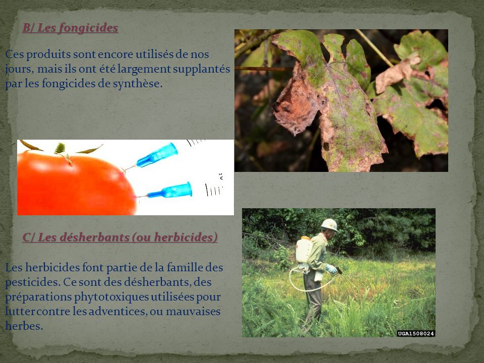 incidence dans l environnement : On retrouve des pesticides partout.