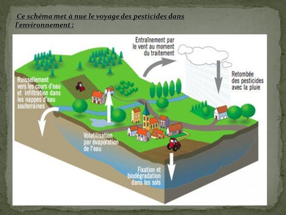 Les voies d'expostion : Les voies d'exposition aux pesticides sont les suivantes :  Voie orale : – en mangeant des aliments contaminés ; – par le contact et l'ingestion de sol contaminé (surtout chez les enfants) – en buvant de l'eau contaminée (Ex : eau d'irrigation contaminée après les épandages aériens).