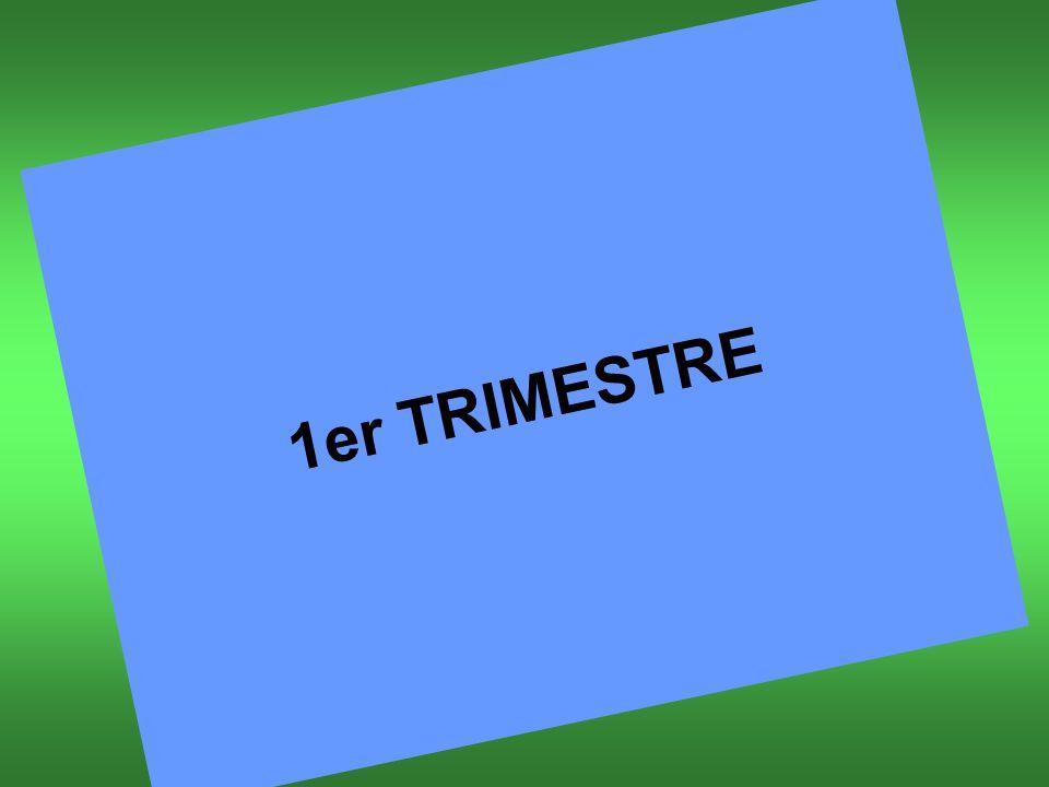 1er TRIMESTRE