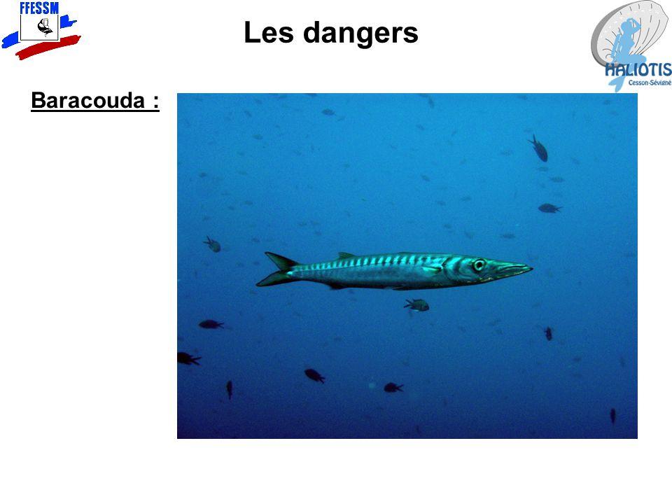 Les dangers Baracouda :