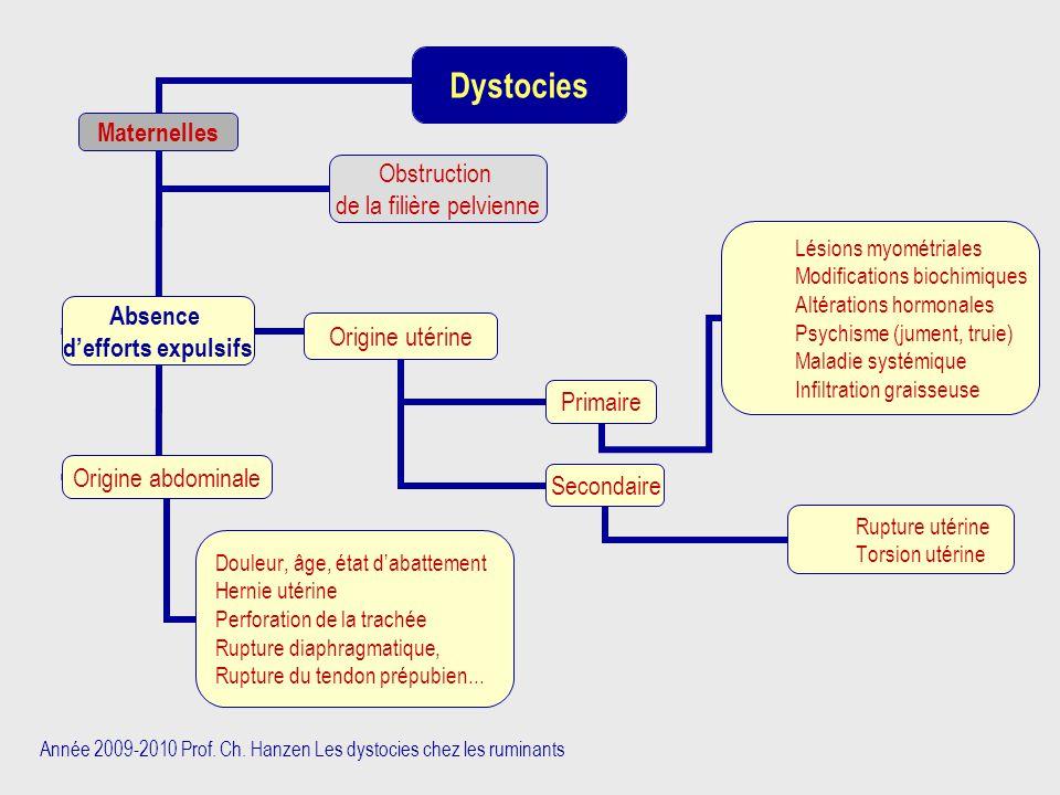 Année 2009-2010 Prof. Ch. Hanzen Les dystocies chez les ruminants Dystocies Maternelles Absence d'efforts expulsifs Origine utérine Primaire Lésions m