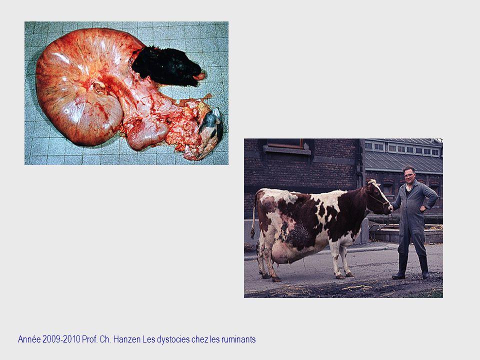 Année 2009-2010 Prof. Ch. Hanzen Les dystocies chez les ruminants