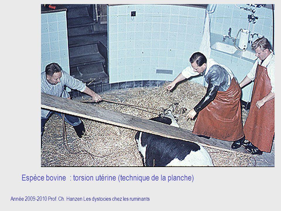 Année 2009-2010 Prof. Ch. Hanzen Les dystocies chez les ruminants Espèce bovine : torsion utérine (technique de la planche)
