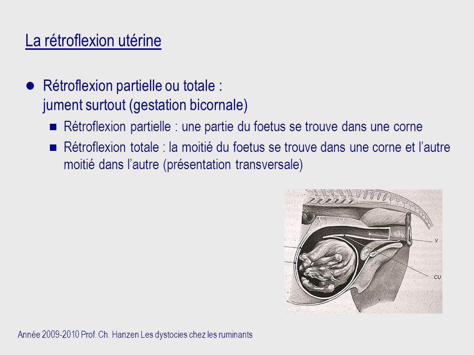 Année 2009-2010 Prof. Ch. Hanzen Les dystocies chez les ruminants La rétroflexion utérine Rétroflexion partielle ou totale : jument surtout (gestation