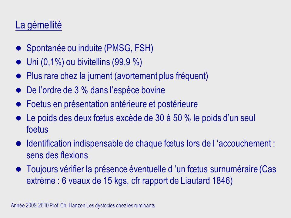 Année 2009-2010 Prof. Ch. Hanzen Les dystocies chez les ruminants La gémellité Spontanée ou induite (PMSG, FSH) Uni (0,1%) ou bivitellins (99,9 %) Plu