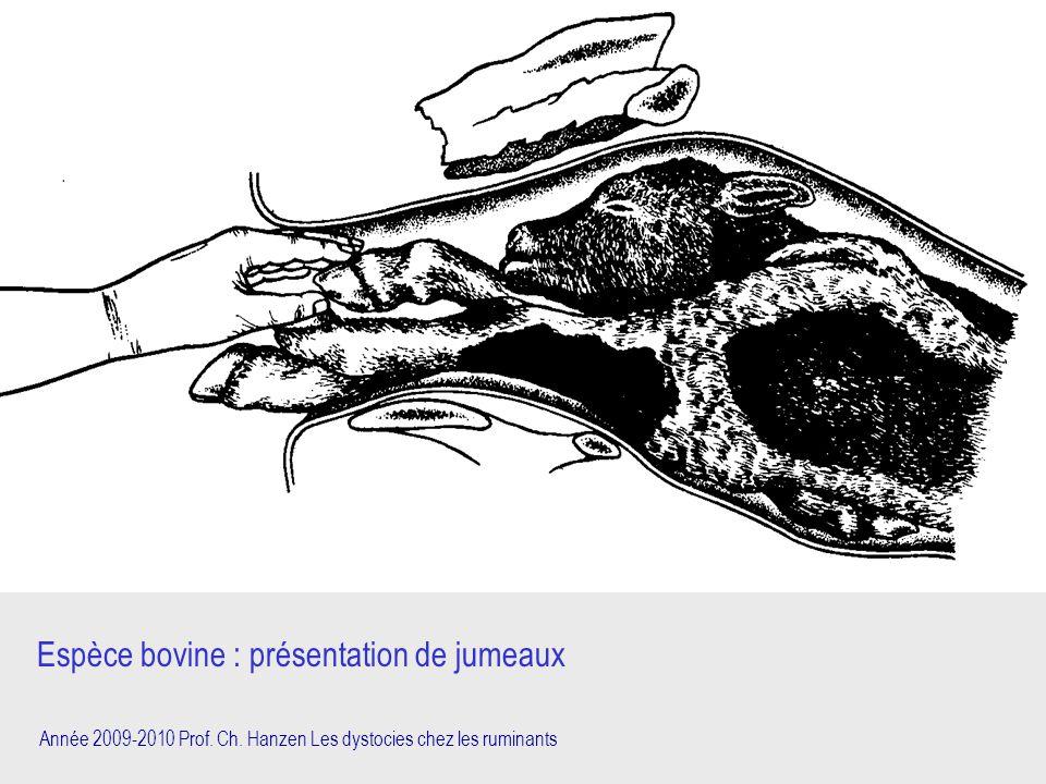 Année 2009-2010 Prof. Ch. Hanzen Les dystocies chez les ruminants Espèce bovine : présentation de jumeaux