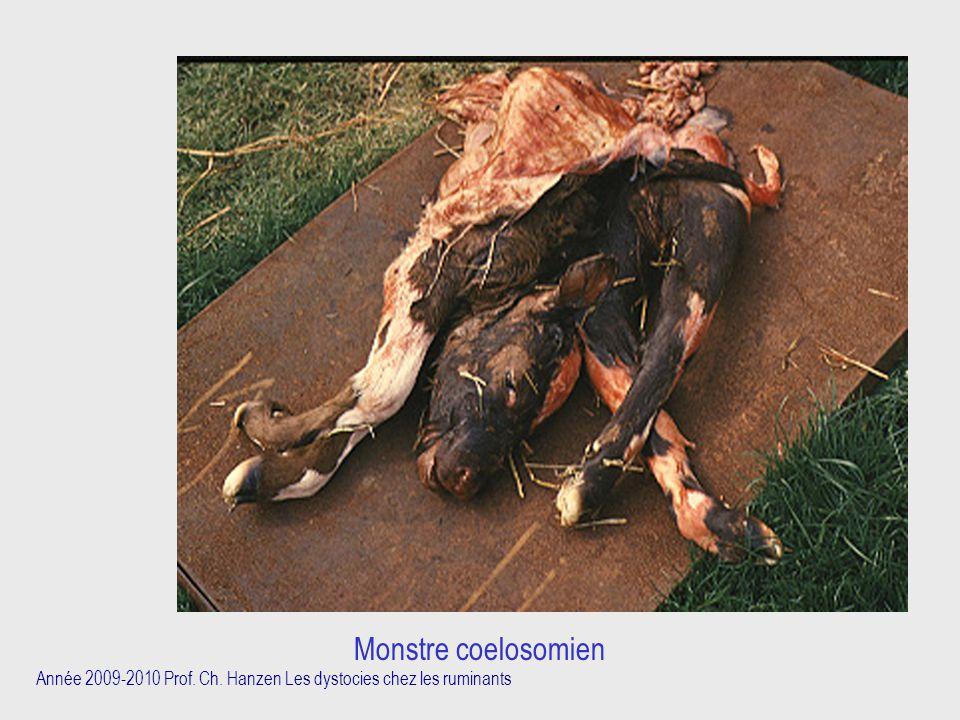 Année 2009-2010 Prof. Ch. Hanzen Les dystocies chez les ruminants Monstre coelosomien
