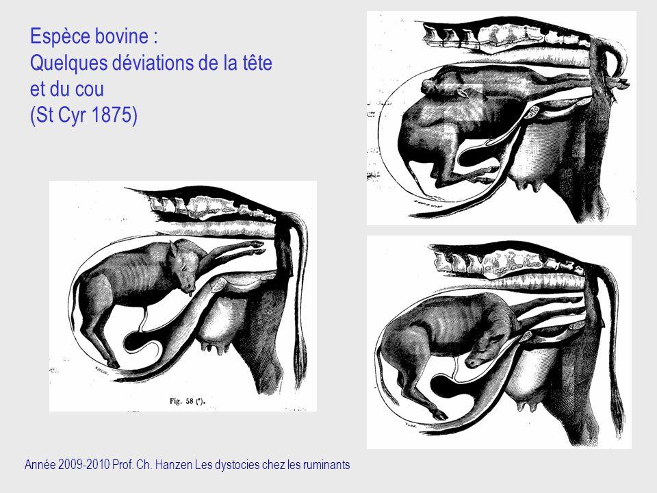 Année 2009-2010 Prof. Ch. Hanzen Les dystocies chez les ruminants Espèce bovine : Quelques déviations de la tête et du cou (St Cyr 1875)