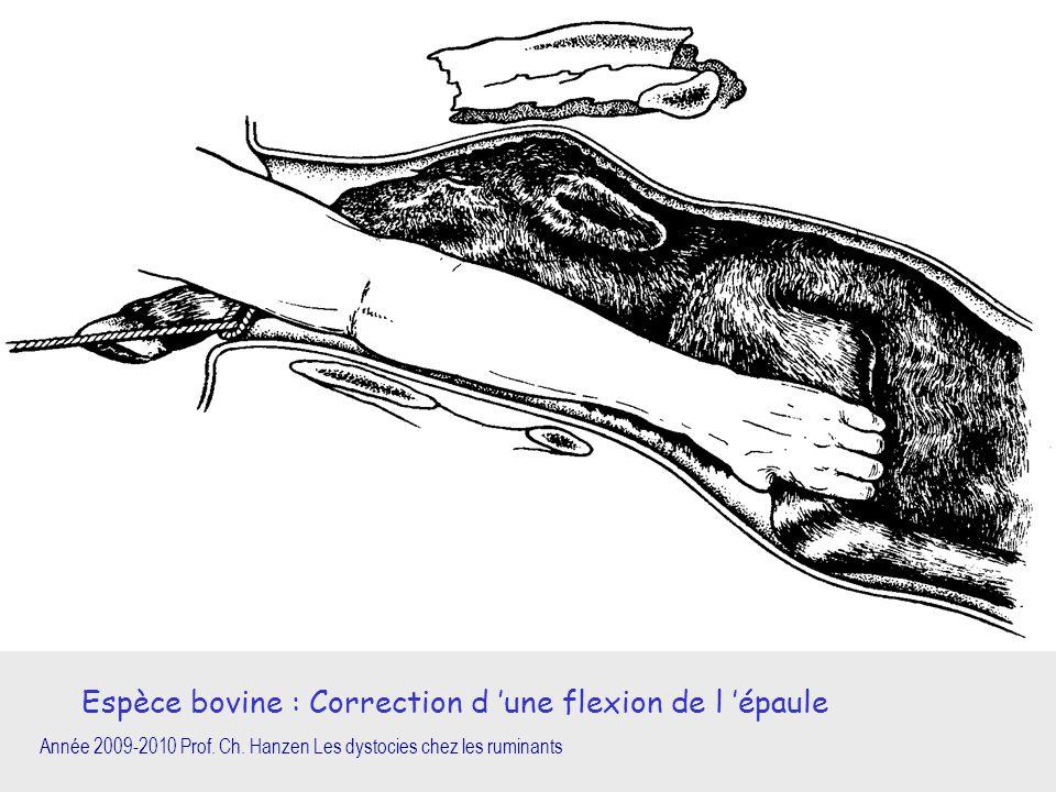 Année 2009-2010 Prof. Ch. Hanzen Les dystocies chez les ruminants Espèce bovine : Correction d 'une flexion de l 'épaule