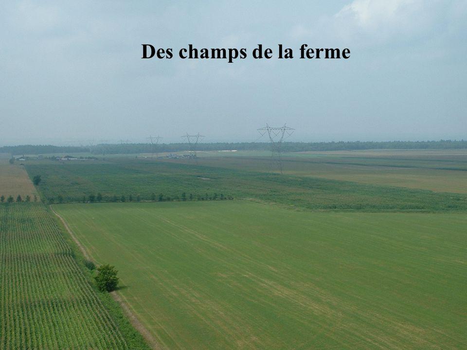 Des champs de la ferme