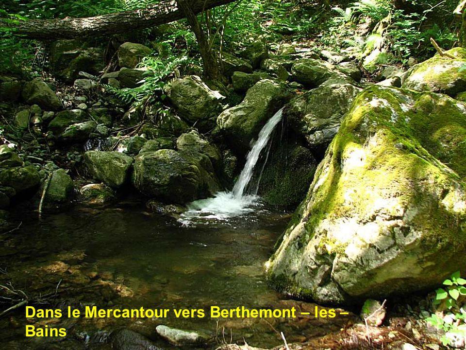 En montant au lac Peissier ( Pays du Buëch Hautes Alpes )